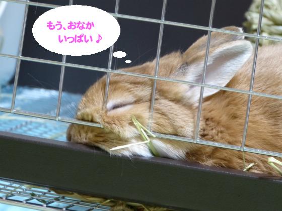 ぴょん子140209_04
