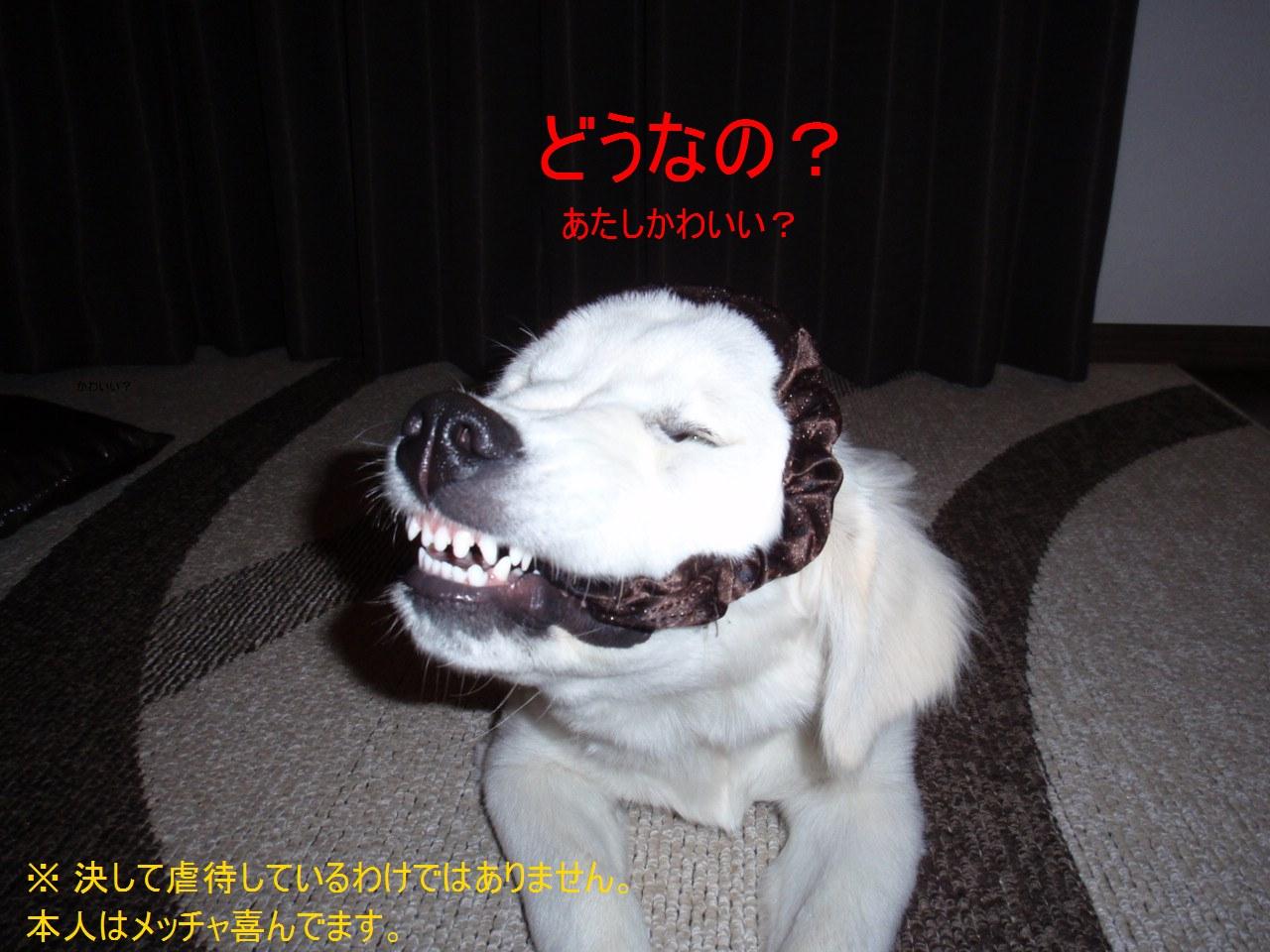 2013_0530_194020-P5300478 - コピー (2)