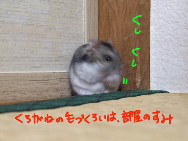DSCF130409a6149.jpg