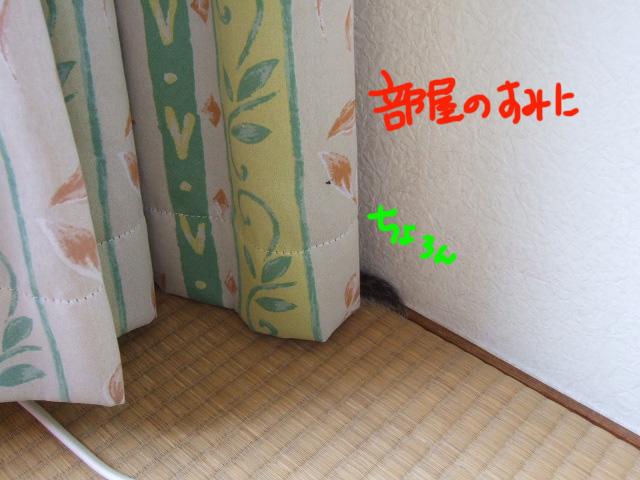 DSCF130520a6964.jpg