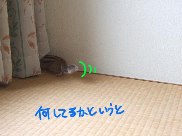 DSCF130607b7075.jpg