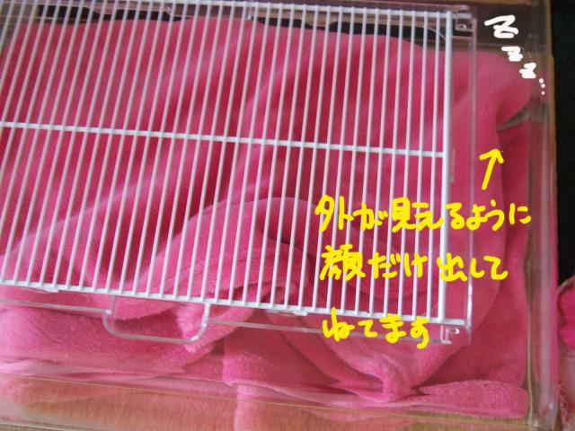 DSCF130802a7854.jpg