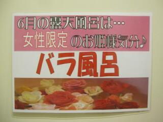 IMG_3879t.jpg