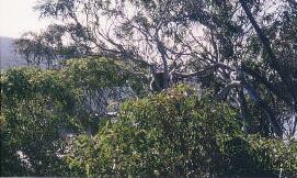 australia_135.jpg