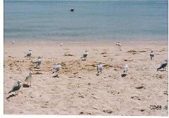 australia_68.jpg