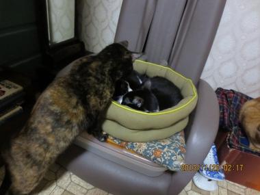 2013.11.20-a-3 mao, nao & yuka