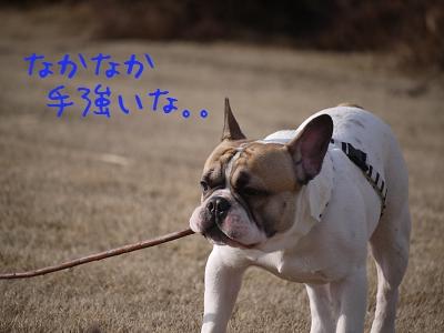 kiji_25_5_13_reo3.jpg
