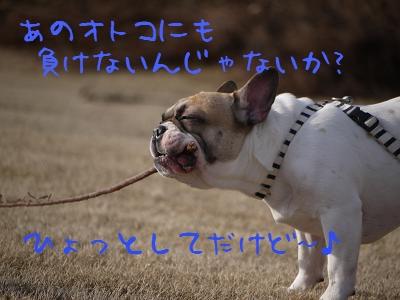 kiji_25_5_13_reo4.jpg