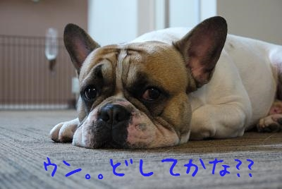 kiji_25_6_2_reo1.jpg