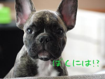 kiji_25_9_23_tora2.jpg