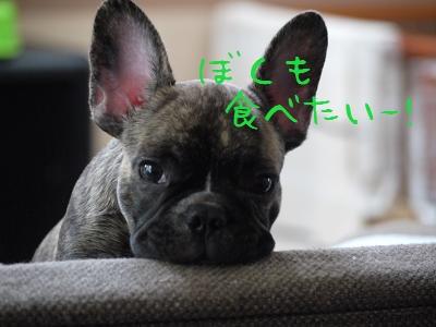 kiji_25_9_23_tora4.jpg