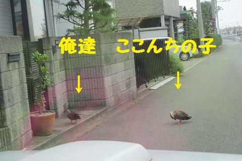 IMG_0951.jpg