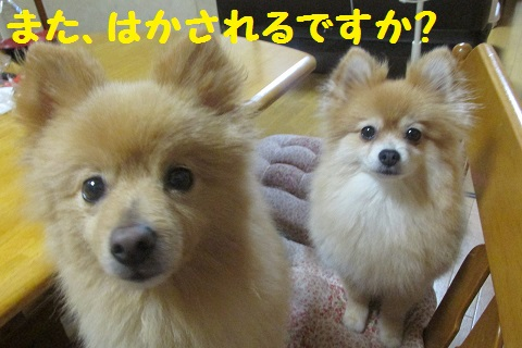 IMG_1259.jpg