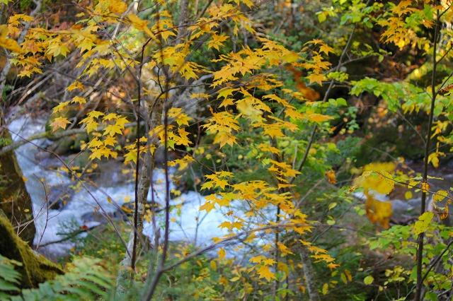 赤石川と紅葉