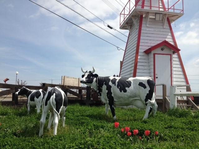 牛とチューリップ