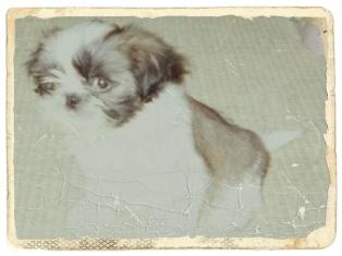 長女子犬08