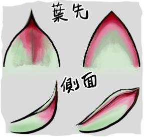 20131005葉先図