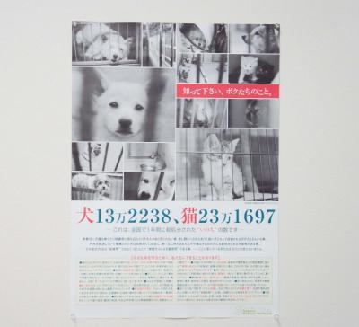 DSC02966_convert_20130515221650.jpg