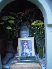 こんあいばママ-レオお墓中