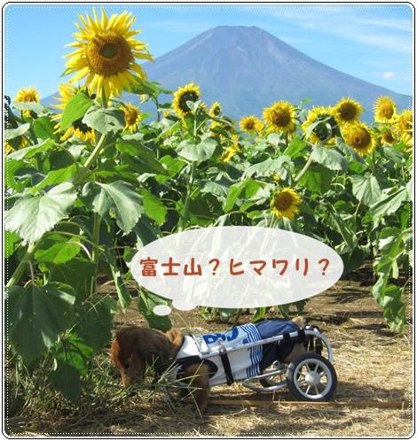 IMG_0410.jpg