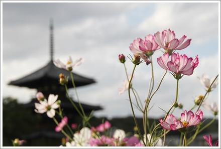 2013_houkiji_1.jpg
