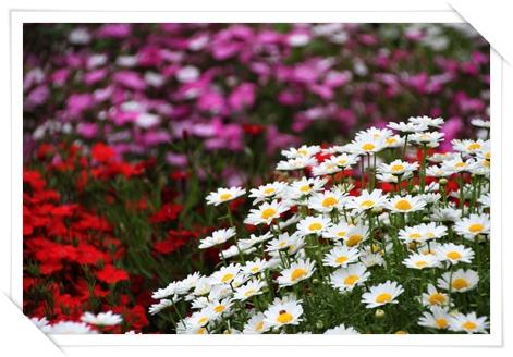 flower_2013.jpg