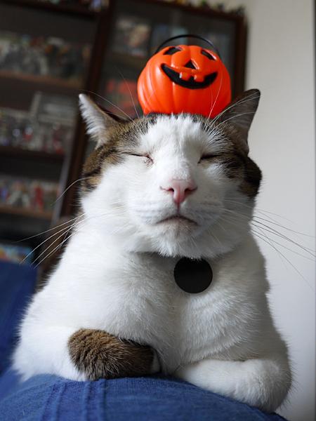 131101_pumpkin1.jpg