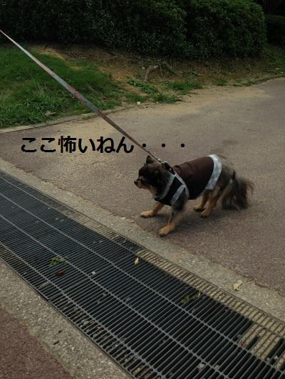 7_201309231954321dc.jpg