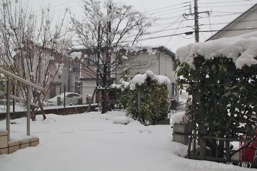 2月14日の雪