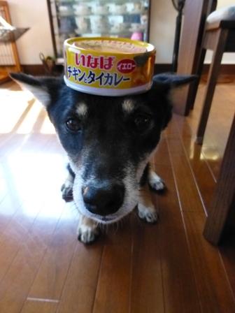 チキンとタイカレー(イエロー)9