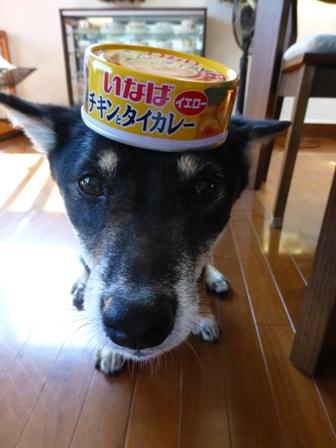 チキンとタイカレー(イエロー)10