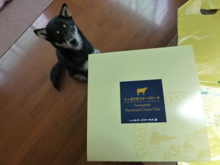 八ヶ岳チーズケーキ工房2