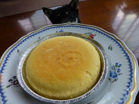 八ヶ岳チーズケーキ工房10