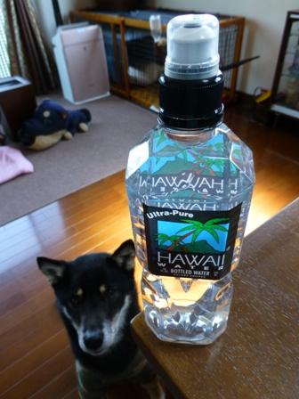 ハワイウォーターペットボトル1