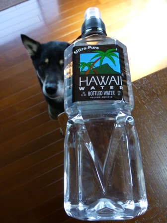 ハワイウォーターペットボトル2