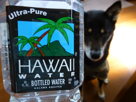 ハワイウォーターペットボトル3