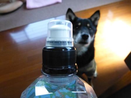 ハワイウォーターペットボトル4