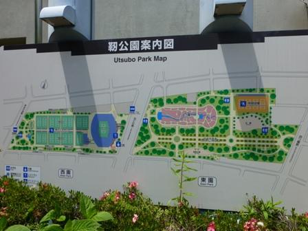 靱公園バラ園1
