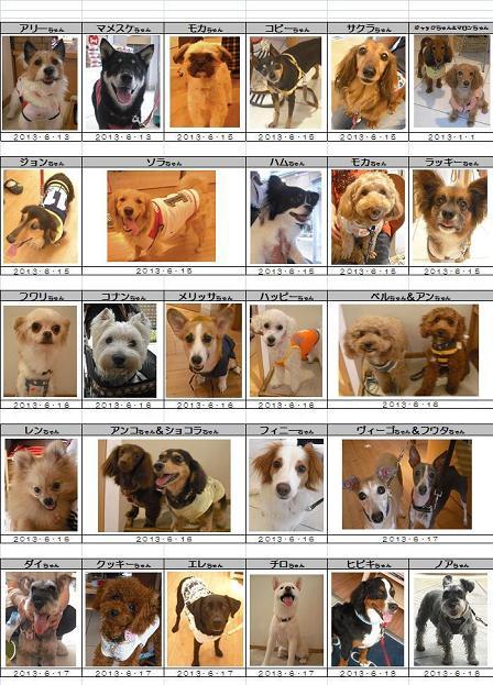 DOG DEPTご来店ワンコ20130613