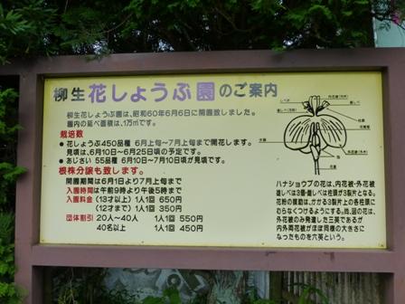 柳生花しょうぶ園9