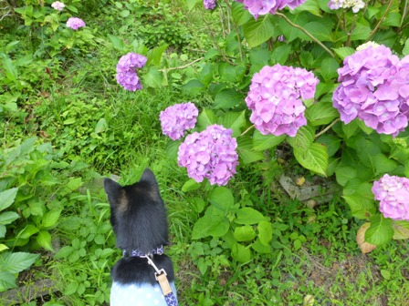 柳生花しょうぶ園18
