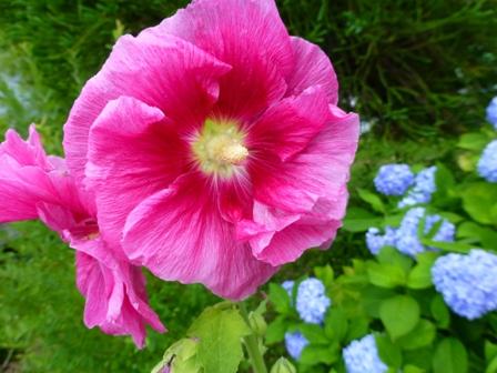 柳生花しょうぶ園25
