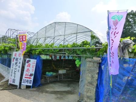 青蓮寺湖観光村ぶどう組合5