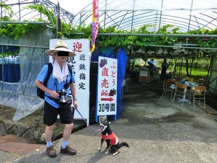 青蓮寺湖観光村ぶどう組合6