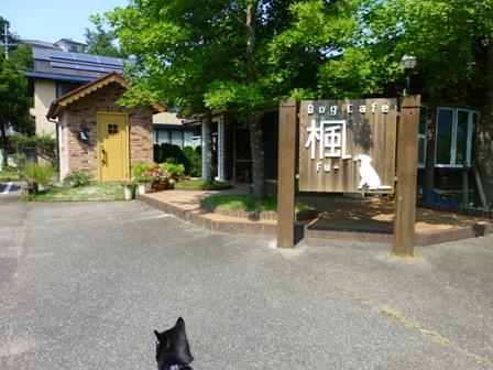 Dog Cafe 楓2