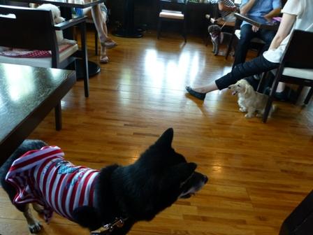 Dog Cafe 楓11