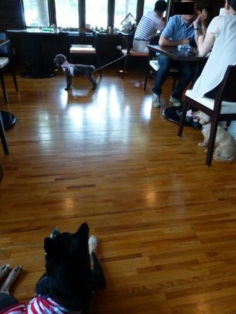 Dog Cafe 楓13