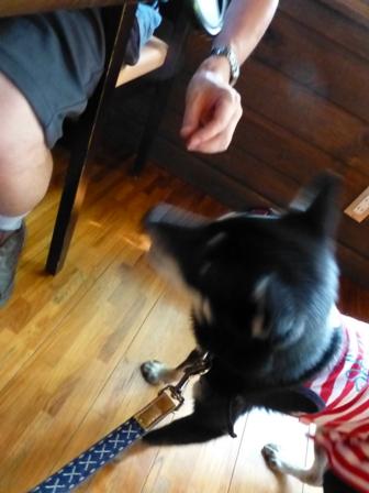 Dog Cafe 楓24