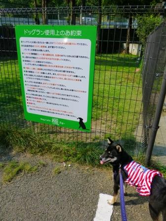 Dog Cafe 楓29