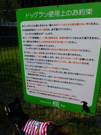 Dog Cafe 楓30
